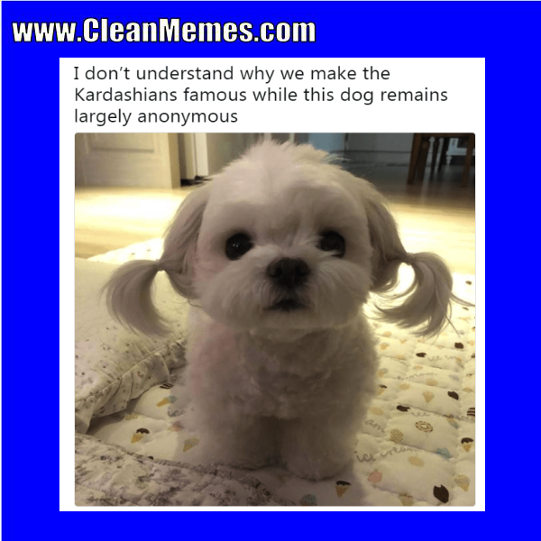 Funny clean dog memes - photo#33