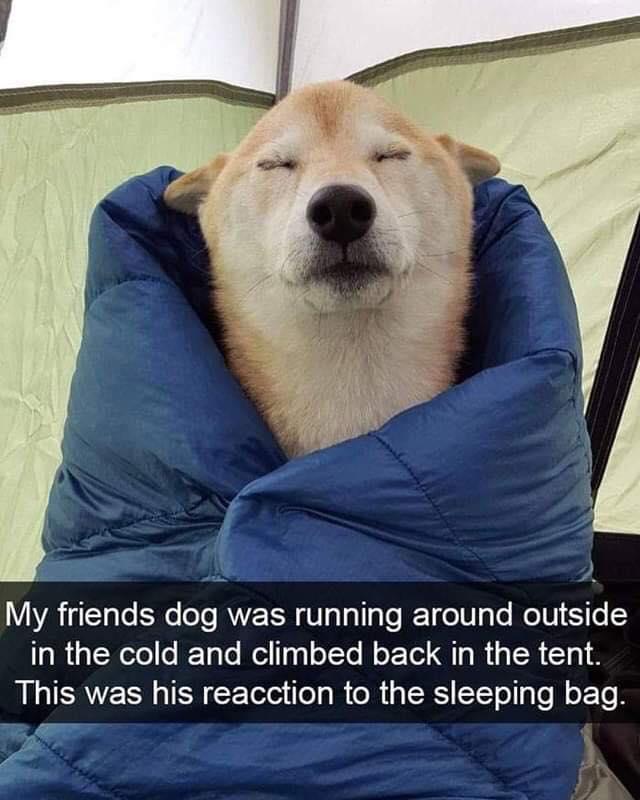 Dog Memes - Clean Memes